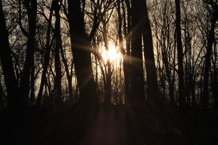 Dunkelheit Wald.klein