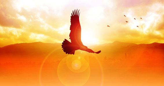 Fliegender Adler vor orangfarbenem Himmel und Bergekette im Sonnenaufgang